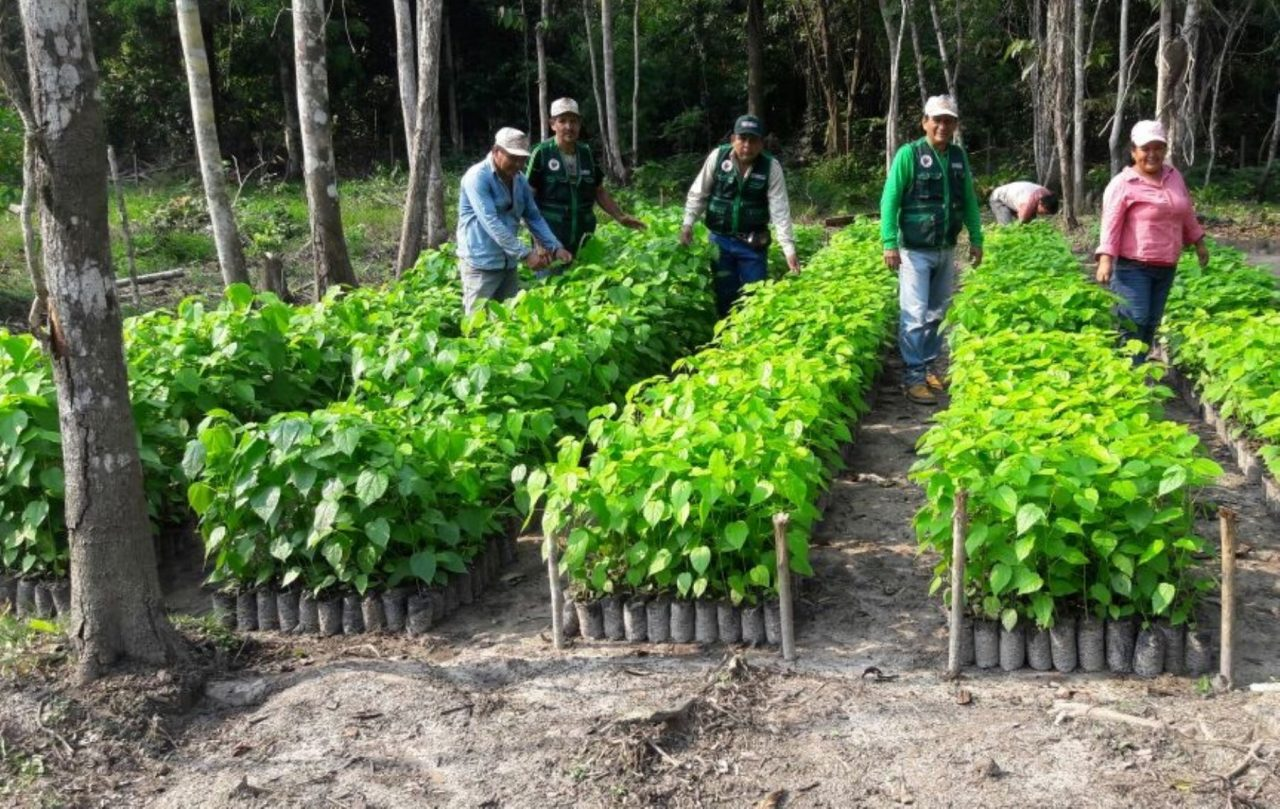 plantaciones-1280x809.jpg